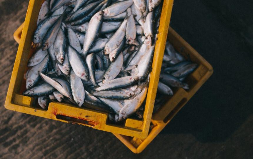 Panorama económico de Perú y su impacto en el seguro marítimo
